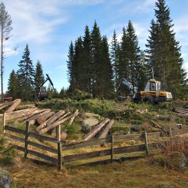 Hogst Skjerva høst 2012 002